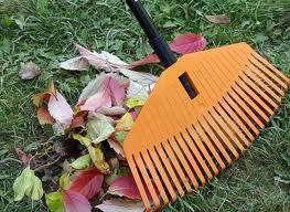 Садовый арсенал: выбор грабли